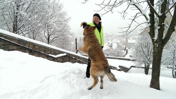 jumping dog bratislava