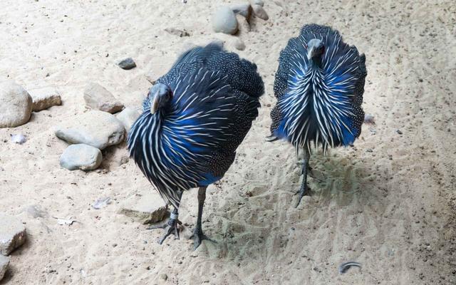 blue birds on the beach