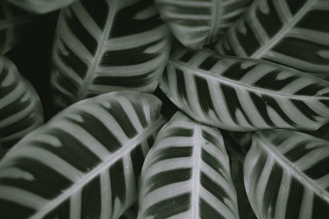 Green mosaic leaves