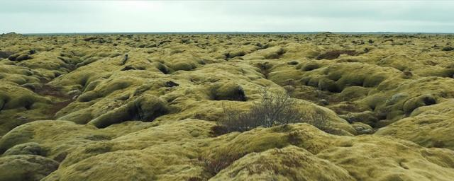 Green Icelandic meadow
