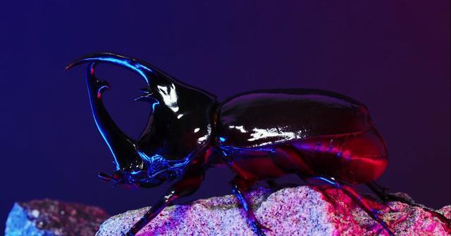 Stag-beetle profile