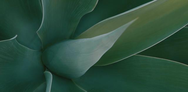 Green succulent plant detail