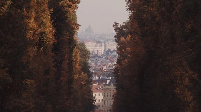 View from a tree alley to the Vienna city centre